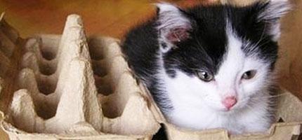 貓咪塞到小空間裡