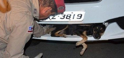狗狗被車撞到後生存