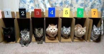 20個「收納」你的貓咪的妙招。養貓之人必看!