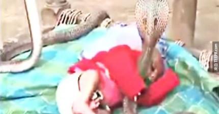 這4條眼鏡蛇正圍著這個人類小嬰兒,原因是為了保護他?!