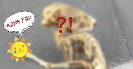 這個男人打開家裡櫥櫃,意外發現一個像繭的詭異巢穴,裡頭保護著一具外星人的屍體?