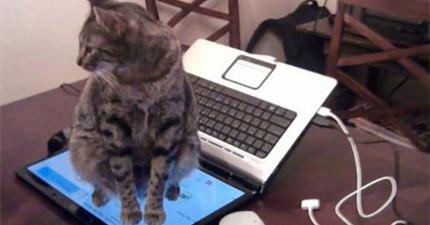 看完這20個貓咪奇怪的行為,我很確定我們還是永遠無法理解貓咪。
