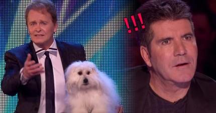 這個男子帶了一隻狗狗上台,結果狗狗說出的第一句話就把毒舌評審給嚇傻了!