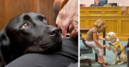 只要有了這些神奇的「法庭狗」,法官就能順利的找出犯罪真相了!