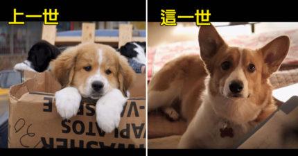電影《為了與你相遇》讓你看到狗狗輪迴每一世,看完預告片後才知道他們一直都沒死,而且使命這麼偉大!