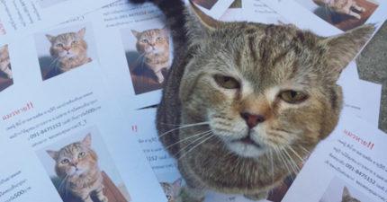 老子只是去散步!愛貓失蹤好緊張,貓皇回家驚見「滿地自己照片的傳單」直接眼神死!
