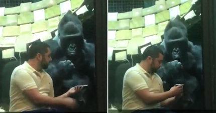 男子拿出母猩猩的照片,大猩猩仔細研究後一直揮手表示「看下一張」!還已經開始用交友軟體...