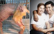 獒犬慘被虐待「體重只剩1/3」!羅志祥媽媽「悄悄負擔大筆醫療費」救她,惡主仍逍遙法外!(影片)