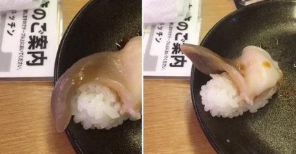 吃迴轉壽司店的北寄貝,吃到一半北寄貝竟「動起來脫離白飯」跟他打招呼!網友:這才叫新鮮...