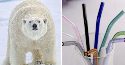 環保吸管一點都不環保還「消耗更多資源」,救了海龜但卻害死了北極熊!