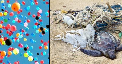 把氣球放到天空很美?降落後的氣球「帶來最大的生態浩劫」海龜全身被線纏死令人超心碎!