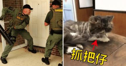 警察找到嫌犯卻「無法破門而入」 下秒貓大人偷開門出賣:這小廢廢買的罐頭太難吃...