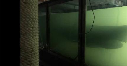 影/網紅貪玩去廢棄遊樂園拍片 18:10一抬頭驚見「被遺棄的牠」嚇到漏尿!