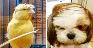 22個「髮型被同學笑慘」的悲劇毛孩 真正的「怒髮衝冠」太狂啦!