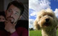 研究發現鬍子男「比狗還髒」太多毛還會害慘自己