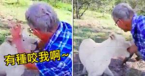 白目男「揮手挑釁母獅」慘被狠咬 護林員:該慶幸這隻還沒餓