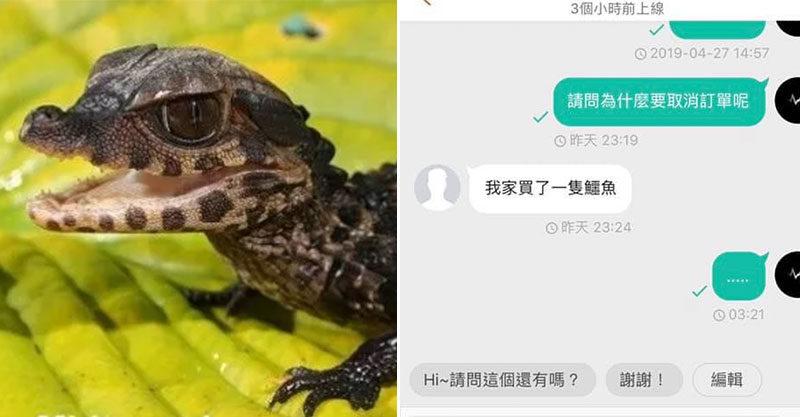 無故取消訂單因為「我家買鱷魚」賣家無言!超誠實買家「全盤托出」網笑噴:怎麼越聽越合理~