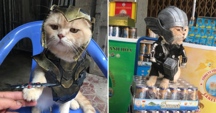 他把寶貝狗Cos成「復仇者英雄」變人氣店寵 網看「超殺氣眼神」狂讚:是薩諾斯!