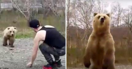 俄羅斯蠢男下車「挑釁棕熊」以為很好玩 下秒「他嚇到超娘尖叫」讓網讚爆:活該!