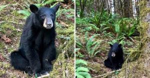 小黑熊因為「太善良」被專家送上天堂 網發現「隱藏版真相」暴怒:都是人類害的!
