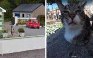 20張讓你笑到缺氧的「動物出現在Google街景」爆笑畫面 還意外拍到白色神獸!