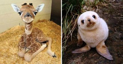 27張「寶寶時期最可愛」的超萌動物 小象寶讓人想抱緊處理!