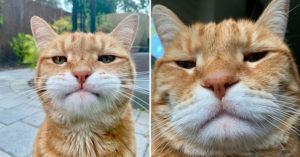 橘貓還原「不小心開到前鏡頭」的大叔自拍 竟然撞臉「超冏表情王」李榮浩!