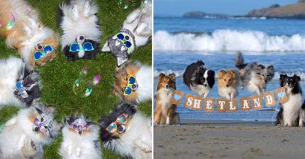 「狗狗當網美」的慈善年曆 高難度動作「只有毛孩做得到」比模特兒還專業!