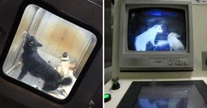 日本曾用「夢幻箱」消滅流浪動物 關進去「灌二氧化碳」6年前才被揭穿