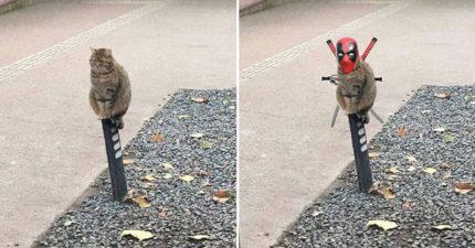 爆笑梗圖「淡定忍者貓」變身超級英雄 腦洞網友惡搞「喵干達萬歲」萌翻天!