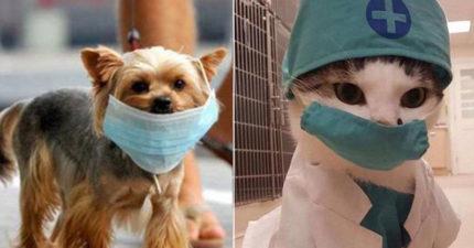 衛生專家曝「寵物也會感染武漢肺炎」被戰翻 世界衛生組織「緊急闢謠」:別害牠們!