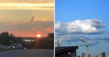 所有的狗狗「都去了天堂」的證據!抬頭看天空「熟悉身影」讓網淚崩