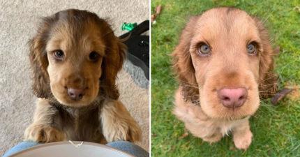 網美狗因為「電眼太迷人」爆紅 「無辜臉蛋+翹睫毛」比女生還正!