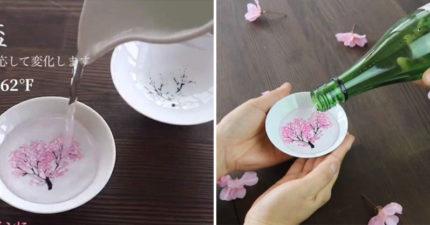 超美櫻花杯「17度冰涼清酒」倒入...枯樹瞬間「開出整片櫻花海」!