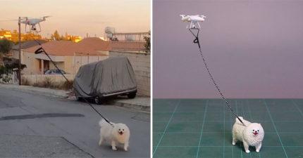 網爆紅「無人機溜狗」被實體化 網笑翻:是狗在遛飛機!