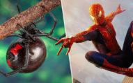 3屁孩「想當蜘蛛人」給黑寡婦咬完變病人