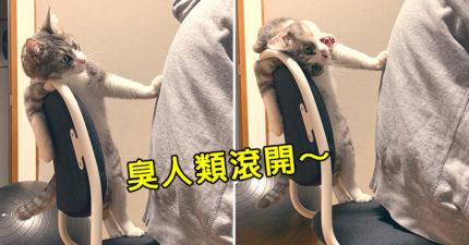 霸氣貓「狂推奴才」想獨佔位子 發現鏡頭「馬上變臉」