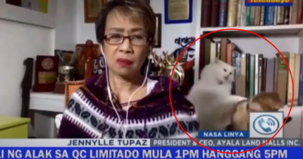 主播報新聞「貓咪摔角」背後搶鏡 她「驚覺不對」只能尬笑XD