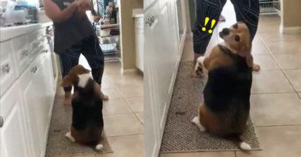 影/狗狗跟媽媽飆舞 回頭發現「相機在拍」卯起來耍帥!