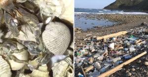 墾丁遊客「盜採寄居蟹」被發現還「故意燒掉」破壞生態