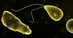 美國驚現「食腦蟲」致命病例 143人感染「只有4人存活」!