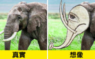 中世紀「傳說裡的動物」長這樣...螢火蟲長歪直接變洋蔥頭