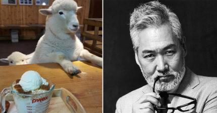 咖啡店分享「招牌羊洗澡」前後驚人反差 網推:帥老闆更值得爆紅