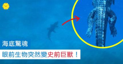 潛水遇小蜥蜴...回神突然變「史前巨獸」:後腳快比人手粗