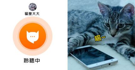 超神APP幫你「精準翻譯貓叫聲」 終於能和貓皇理性溝通!