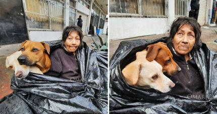 阿嬤每天「住垃圾袋」不願去收容所 透露心碎原因:我走了浪浪怎麼辦