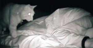 每天睡醒總是很累 她看監視器驚見「被貓皇11點揍到3點」